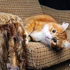 cubre sofas